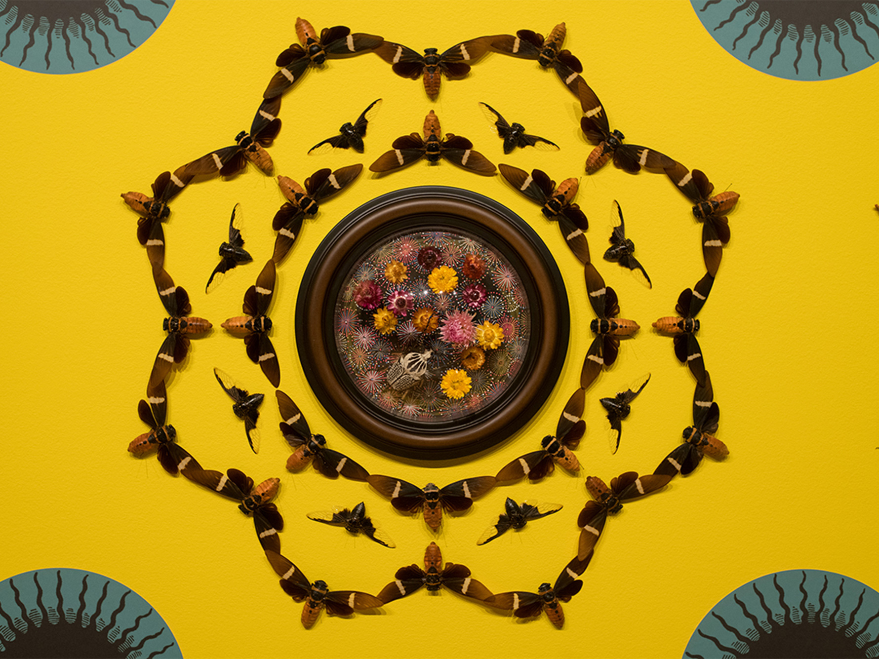 Yellow background with insects pinned in a kaleidoscope pattern.