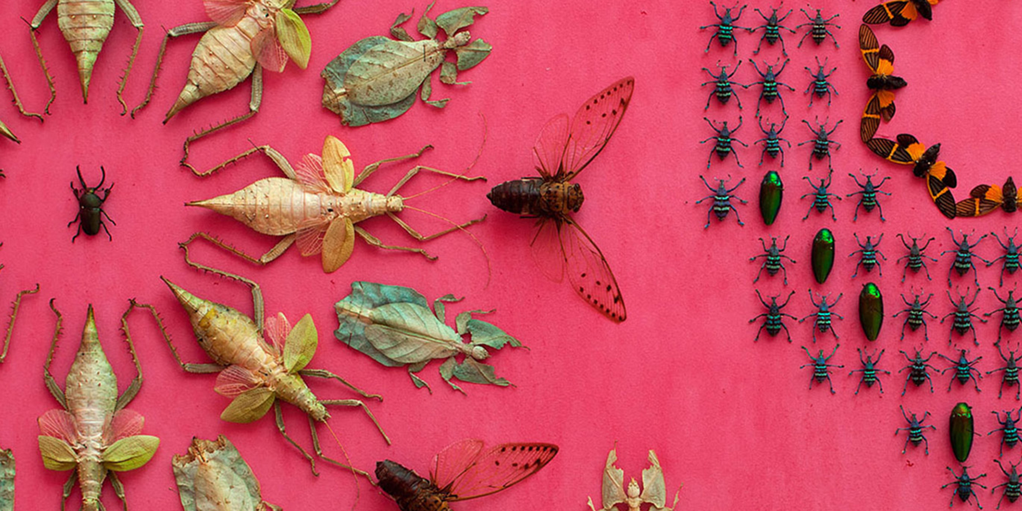 Insects pinned onto a yellow background in intricate geometric designs